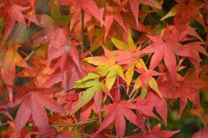 大河内山荘の紅葉2016