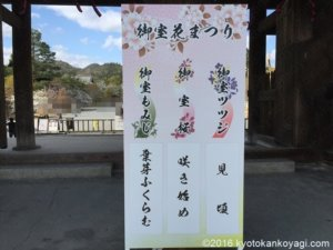 御室桜2020