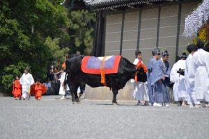 葵祭・牛車