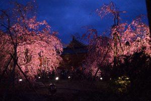 平安神宮しだれ桜コンサート2017