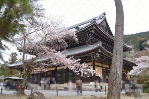 南禅寺の桜2017