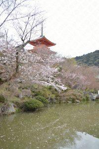 清水寺の桜2017