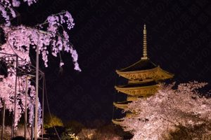 東寺夜桜ライトアップ2017