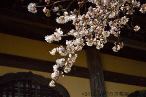 南禅寺の桜2018