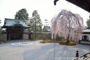 高台寺の桜2018