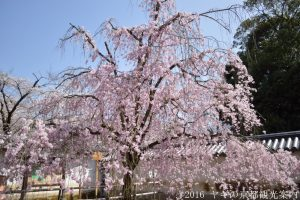 醍醐寺の桜2018