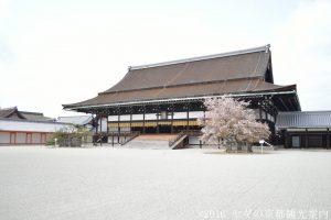 京都御所の桜 2018