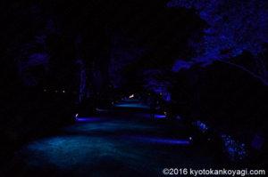 京の七夕2019二条城