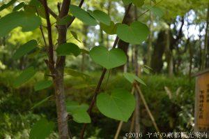 下鴨神社の葵