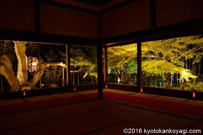 宝泉院桜ライトアップ