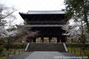 2020年南禅寺の桜